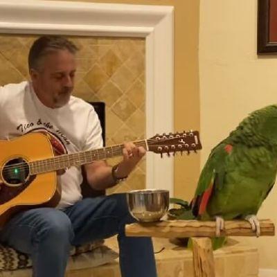 Vídeo: papagaio viraliza cantando clássicos do Rock com o dono nas guitarras